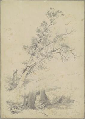 Trees, Hudson