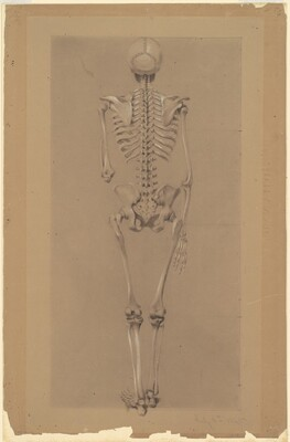 Rear View of a Skeleton