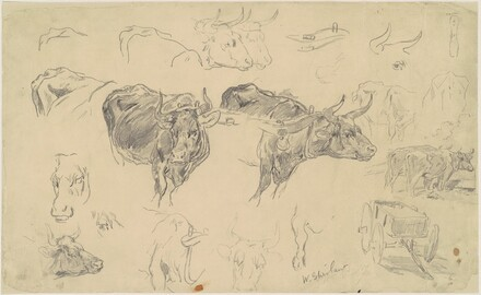Studies of Oxen