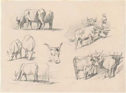 Studies of Cattle