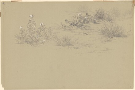 Flowering Bush and Desert Plants