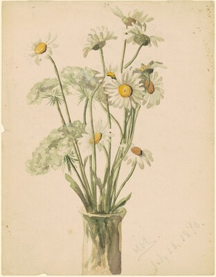 Daisies and Queen Ann's Lace in a Vase