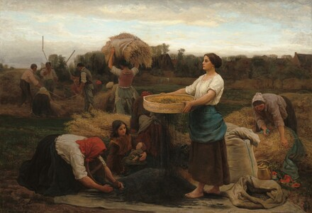The Colza (Harvesting Rapeseed)