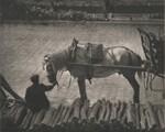 image: A Snapshot, Paris [horse]