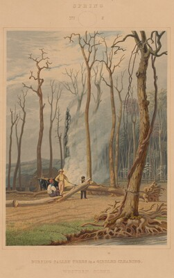 Spring--Burning Fallen Trees in a Girdled Clearing. Western Scene