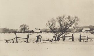 The Snowy Marshlands