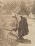 image: Harvesting