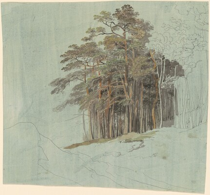 A Study of Pine Trees