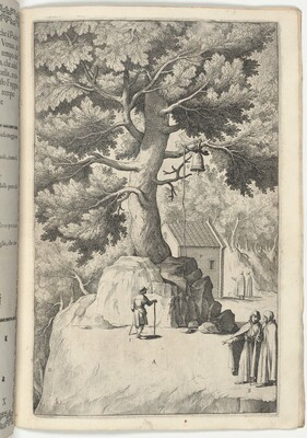 Beech Tree with the Bell (Faggio della campana)
