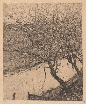 Apple Trees along the Side of a Ditch