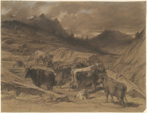 Cattle in the Auvergne