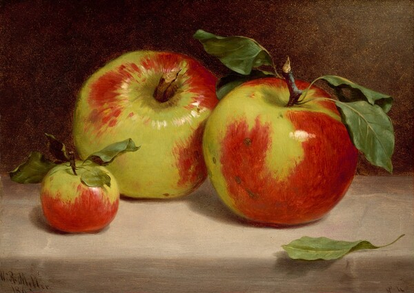 Study of Apples from Nature