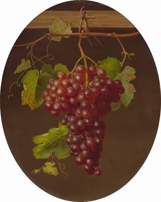 Hanging Bunch of Grapes