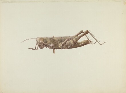 Grasshopper Weather Vane