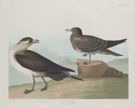 Richardson's Jager