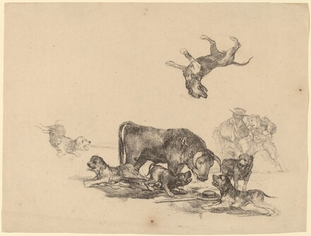 Bull Attacked by Dogs