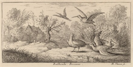 Rusticula, The Woodcock
