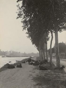 image: Goats outside Paris