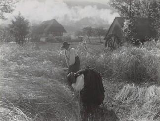 image: Harvesting, Black Forest