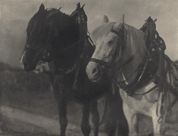 Horses—Tirol