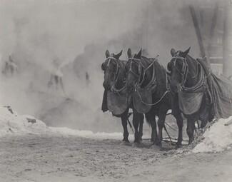 image: Horses, New York