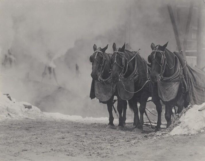 Horses, New York