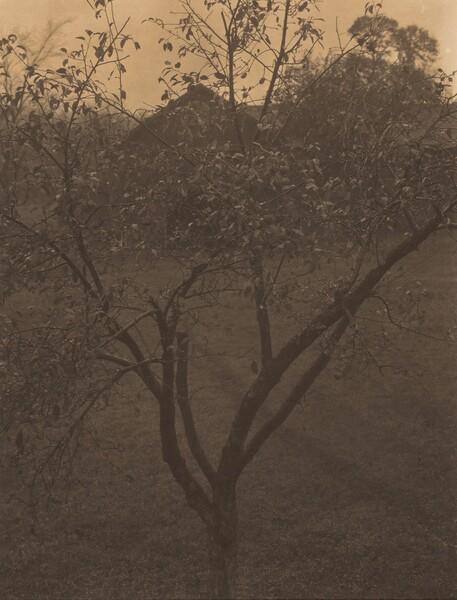 Plum Tree, Lake George or Rain Drops, Apple Tree