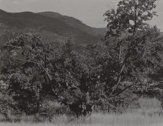 image: The Maple Tree