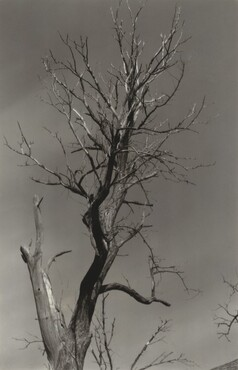 image: The Dying Chestnut Tree or Life and Death