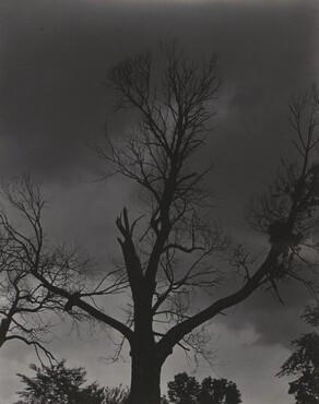 image: Tree Set 4