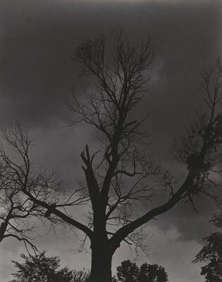 Tree Set 4
