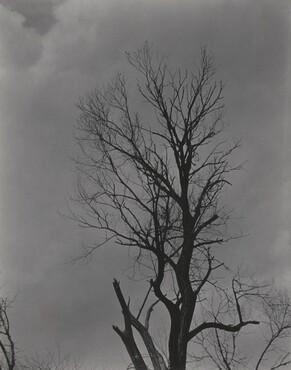image: Tree Set 2