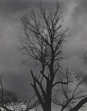 image: Tree Set 5