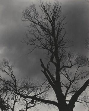 image: Tree Set 1