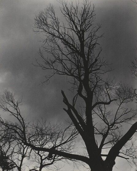 Tree Set 1
