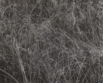 image: Grass