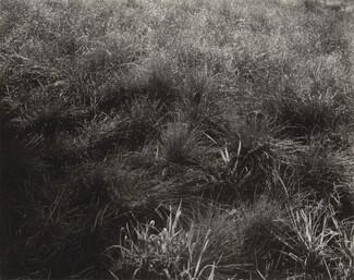 image: Grasses