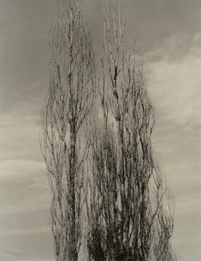 image: The Two Poplars, Lake George