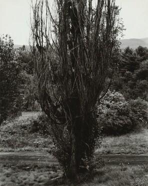 image: Poplar—Lake George