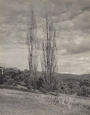 Poplars—Lake George