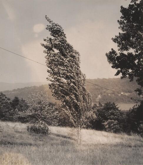 Poplar—Lake George