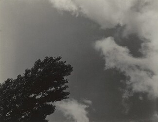 image: Songs of the Sky and Trees