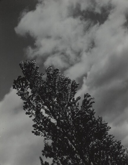 Songs of the Sky and Trees