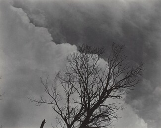 image: Tree Set 3