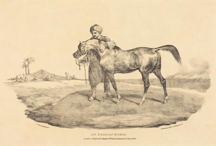 An Arabian Horse
