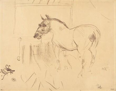 The Small Pony from Calmese (Le petit poney de Calmèse)