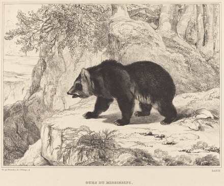 Mississippi Bear