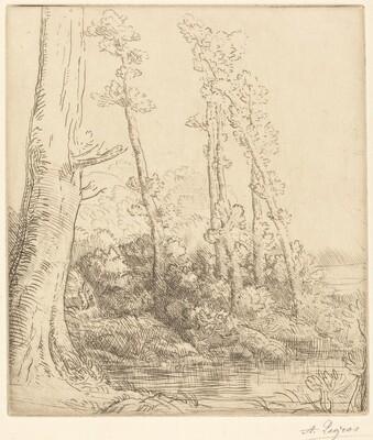 Little Pond (La petite mare)