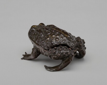 A Large Toad