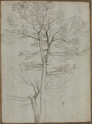 Bare Tree [verso]